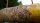 "Insektenhotel ""Blätterdekor""in gelb"